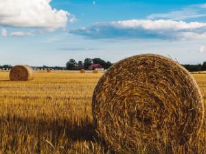 Mietstapler und Anbaugeräte für Ihren Ernte-Einsatz